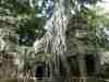 604_Cambodge-Temple-ta-Prohm - 1 point